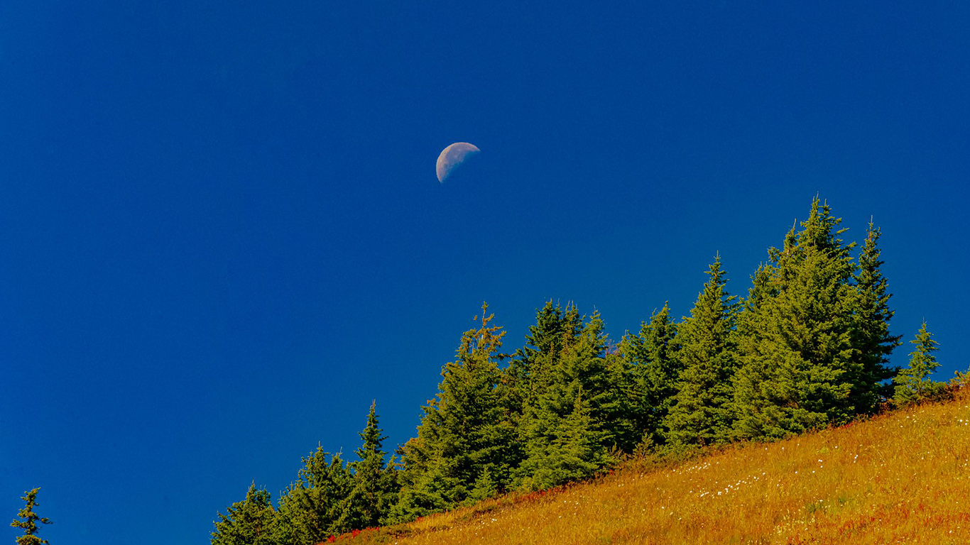 Trees, Moon, Slope Wallpapers Free Download