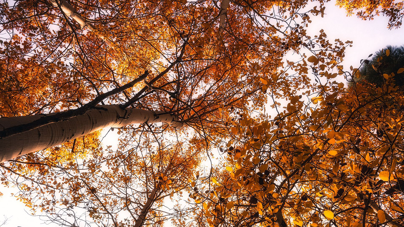 Trees, Treetops, Sky Wallpapers Free Download