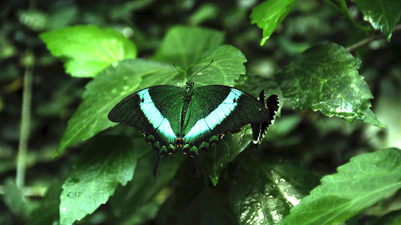 Tropical, Butterfly, Butterfly, Wings Wallpapers Free Download