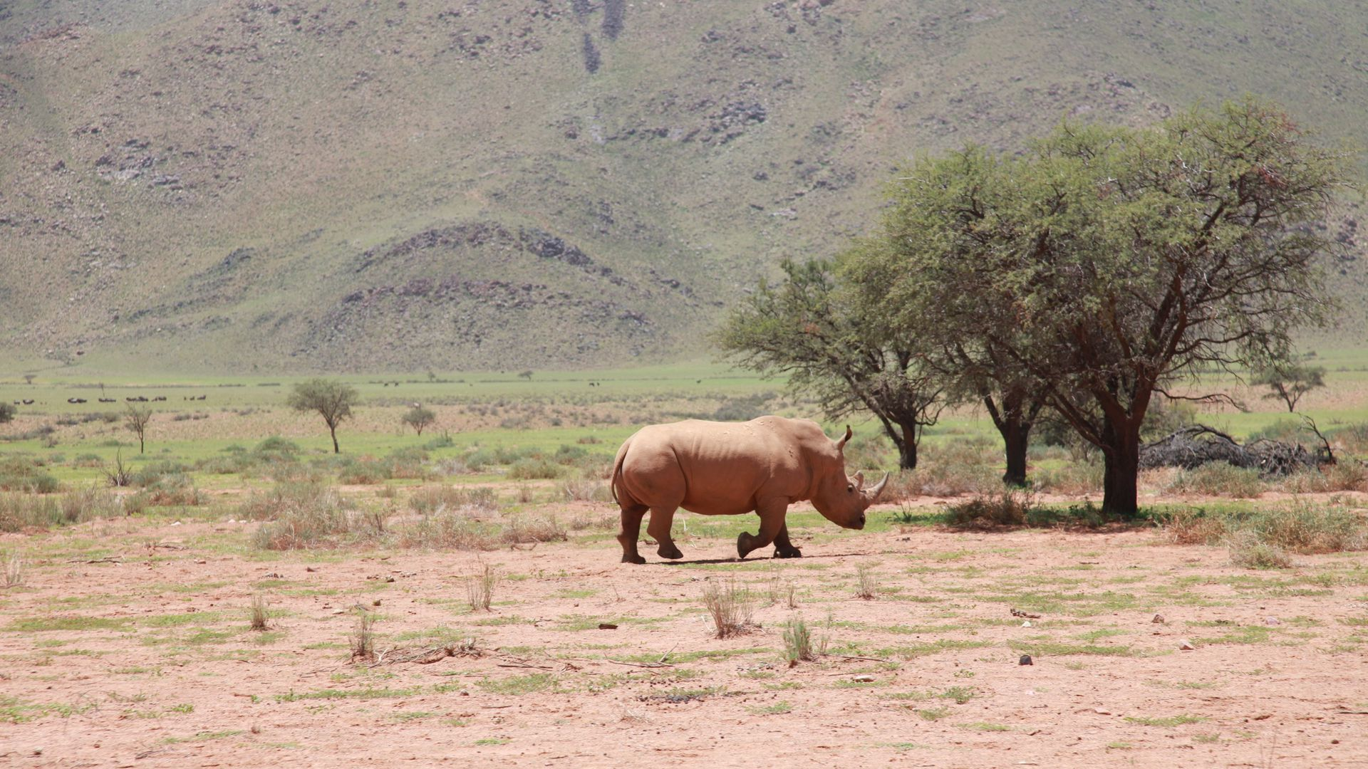 Africa Rhino, Trees, Desert Wallpapers Free Download