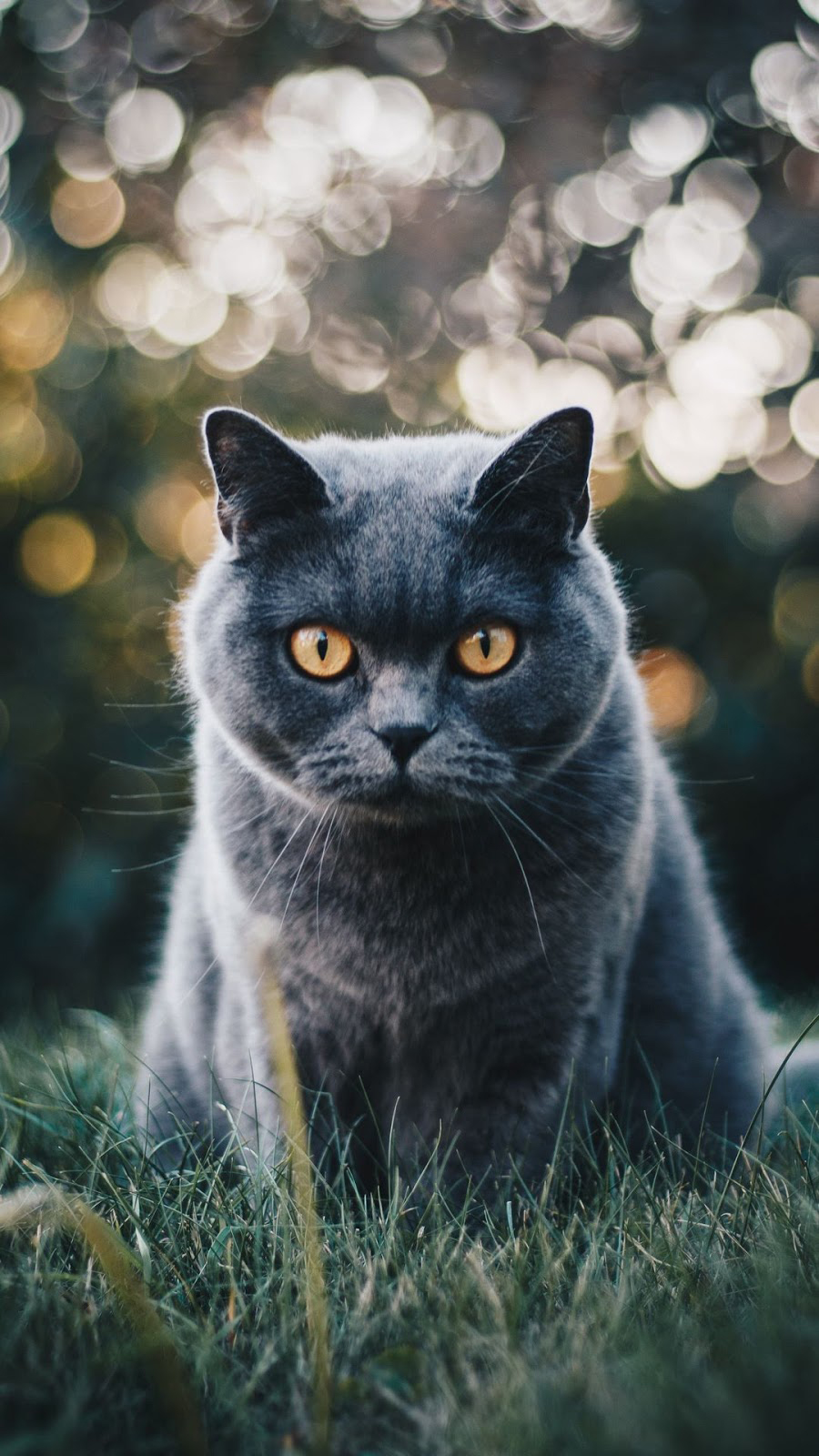 Animals Wallpapers Download – Free Animals HD Wallpapers for Mobile (1)