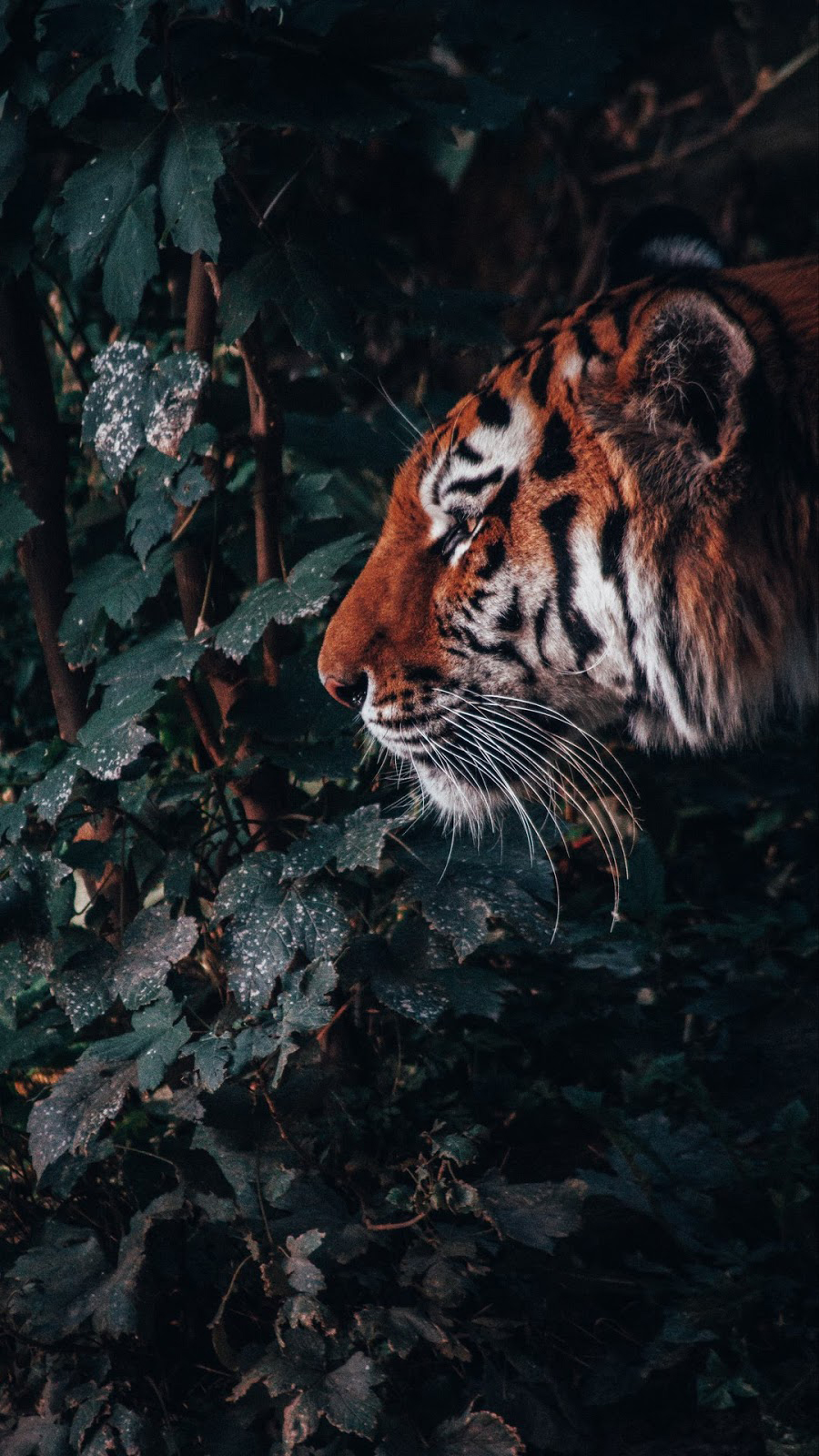 Animals Wallpapers Download – Free Animals HD Wallpapers for Mobile (3)