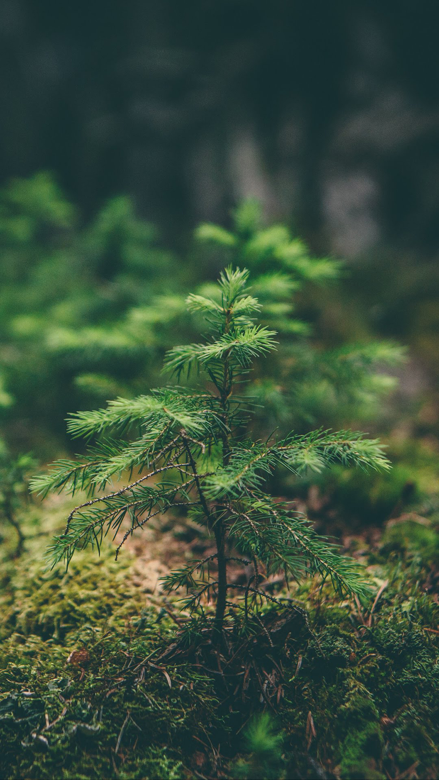 Tree Wallpapers Free Download – Best Tree Wallpapers for Mobile