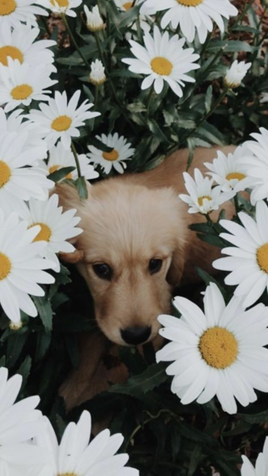 Dog HD Wallpapers For Phone – Best Wallpapers