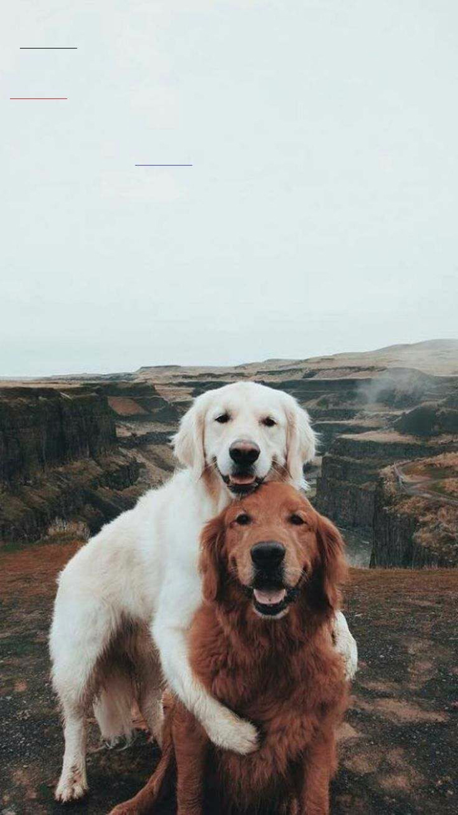 Dog Love HD Wallpapers Free Download