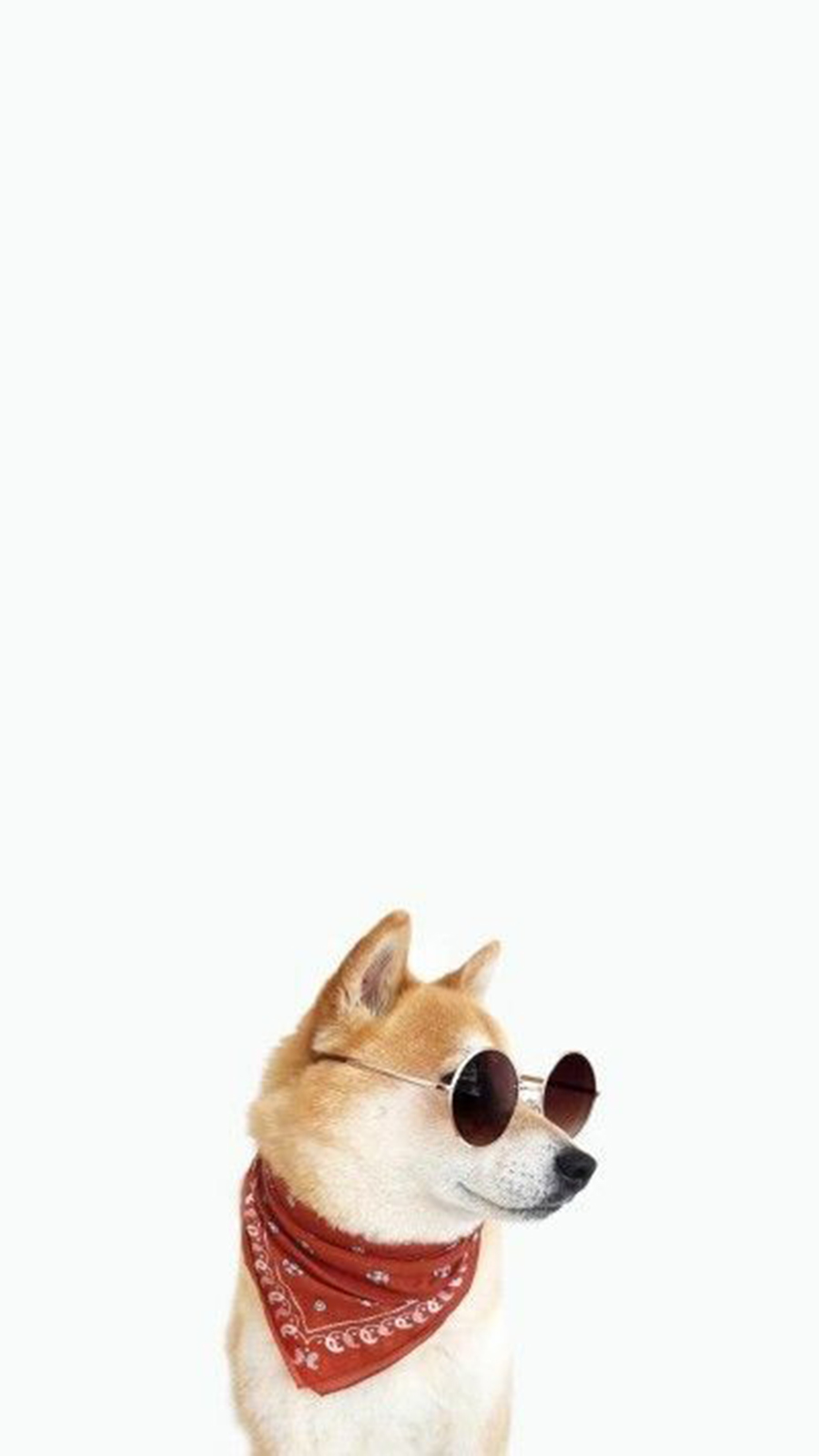 Dog Style Wallpapers Free Download – Best Wallpapers