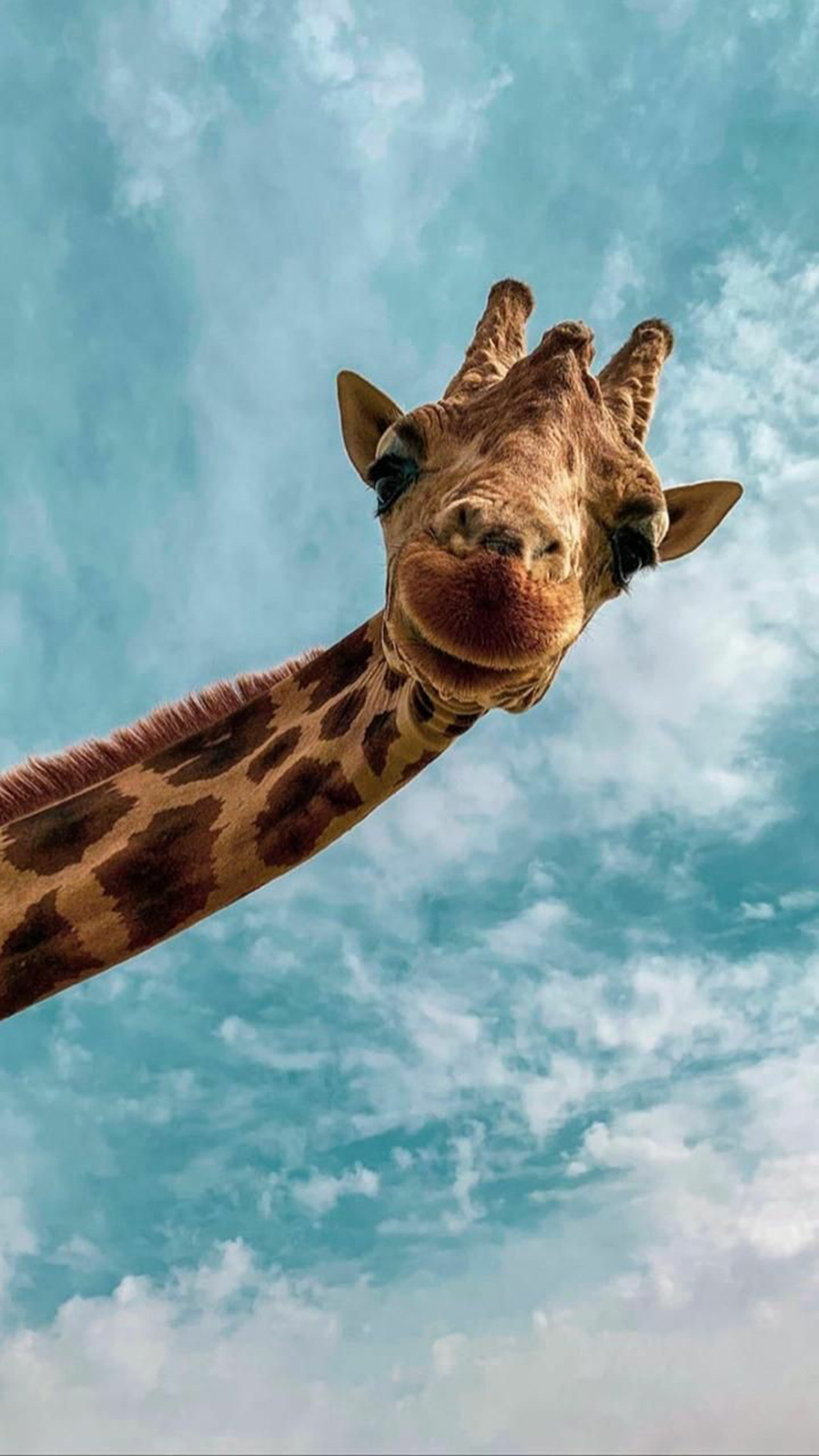 Top Giraffe Phone Wallpapers Free Download – Best Wallpapers