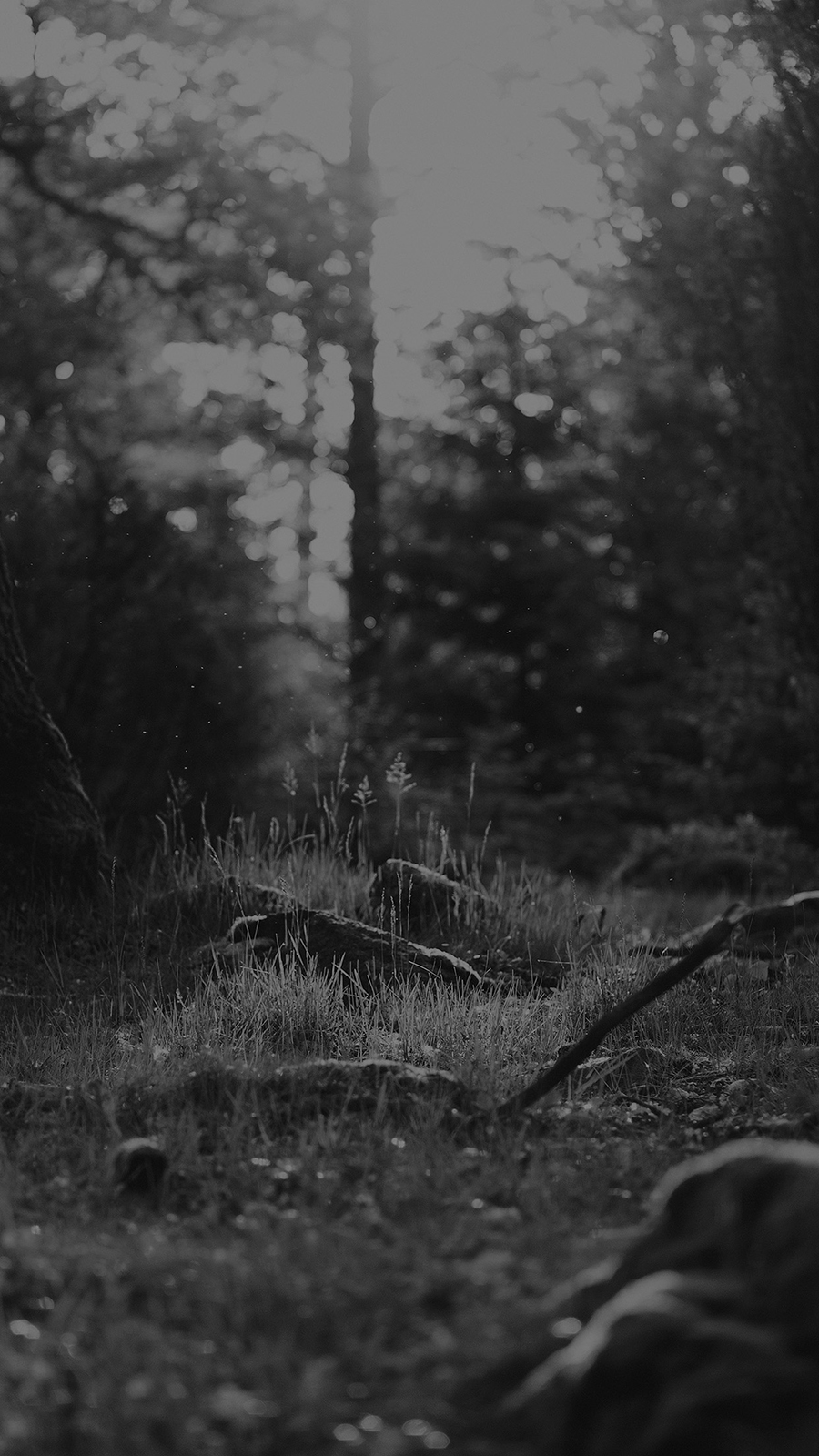 Black And White Forest Nature Wallpapers Download