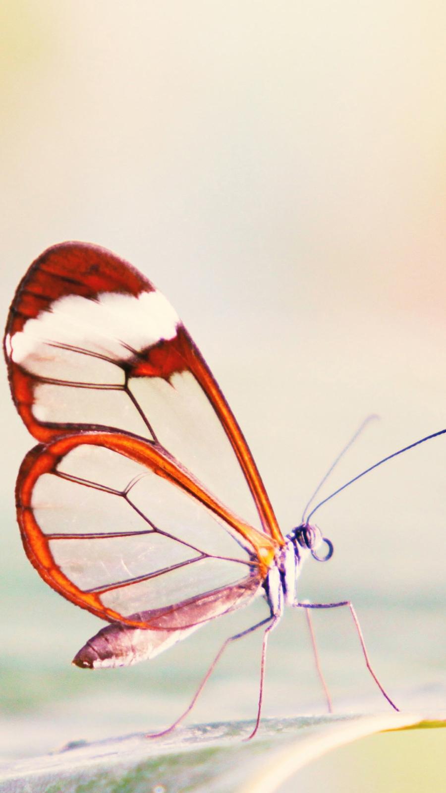 Cute Butterfly 4K Wallpapers Free Download