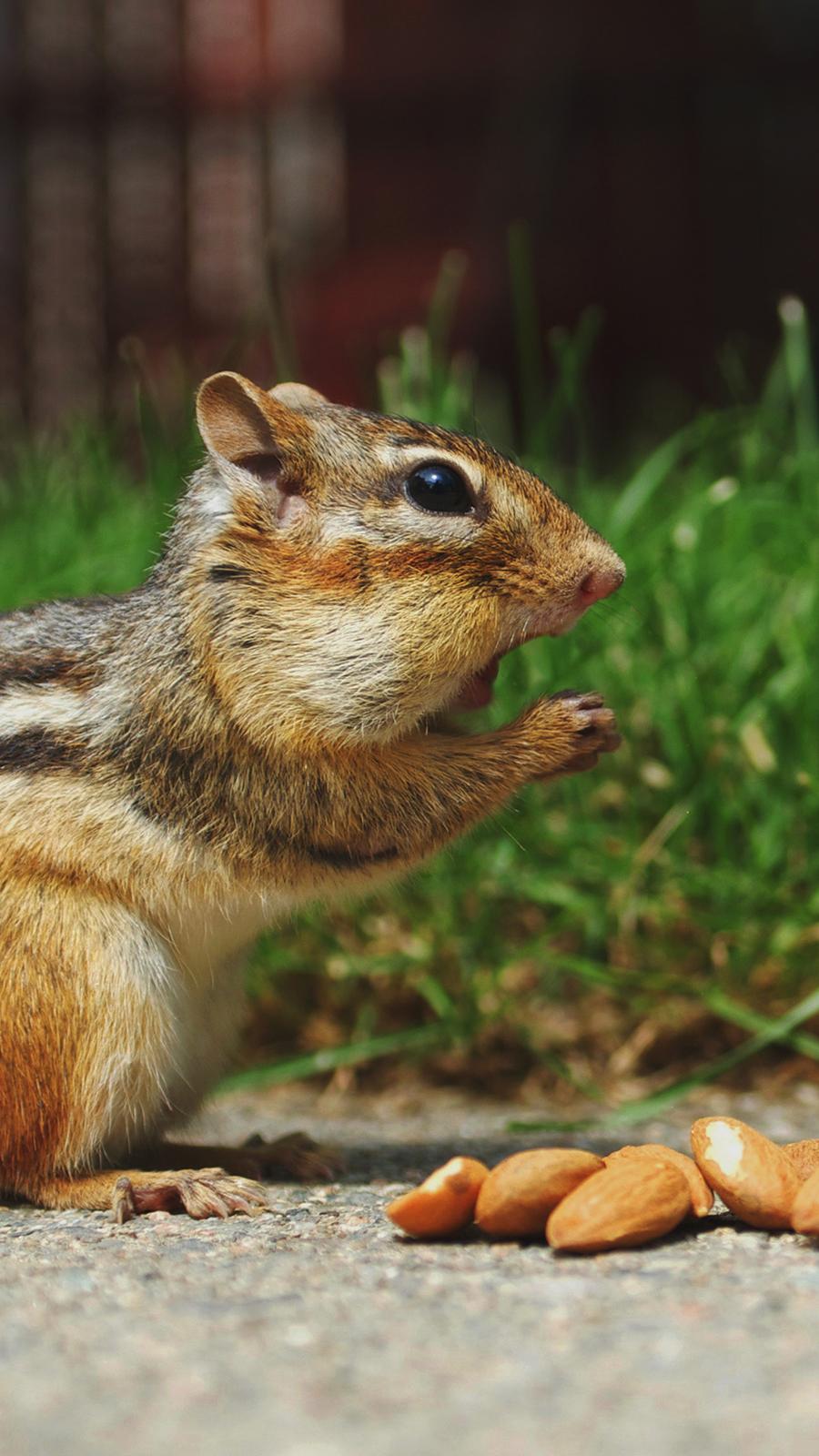 Cute Chipmunk Eating 4K Wallpapers Free Download