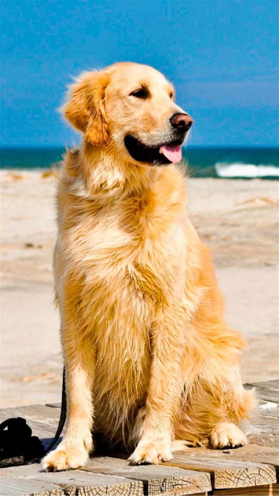 Cute Golden Beach 4K Wallpapers Free Download