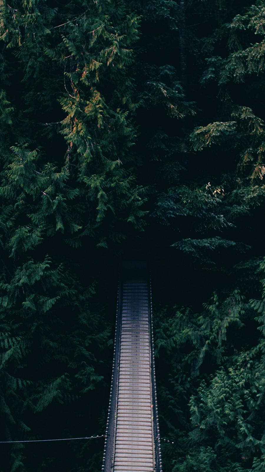 Dense Green Forest Bridge Wallpapers Free Download