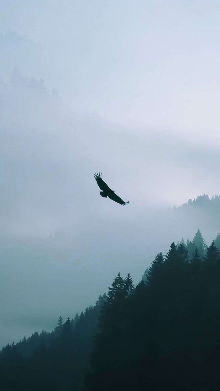 Eagle Flying Over Misty Forest Best Wallpapers Free Download