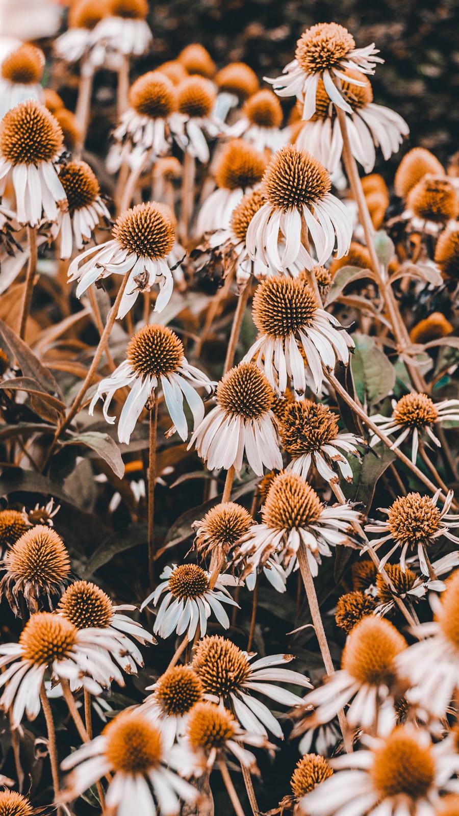 Flower Wallpaper – Nature Wallpapers Free Download