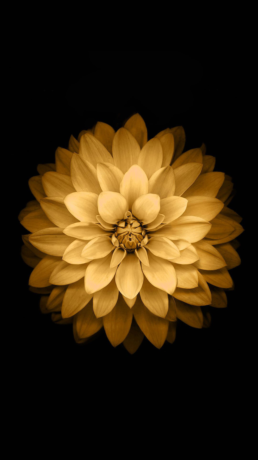 Golden Lotus Flower iOS Android Wallpaper