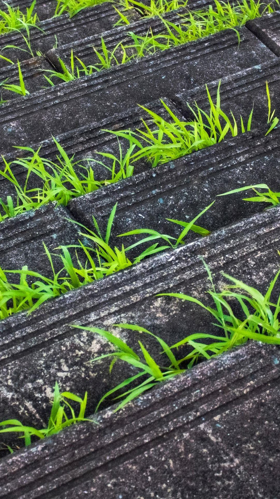 Grass In Pavement Android Wallpaper