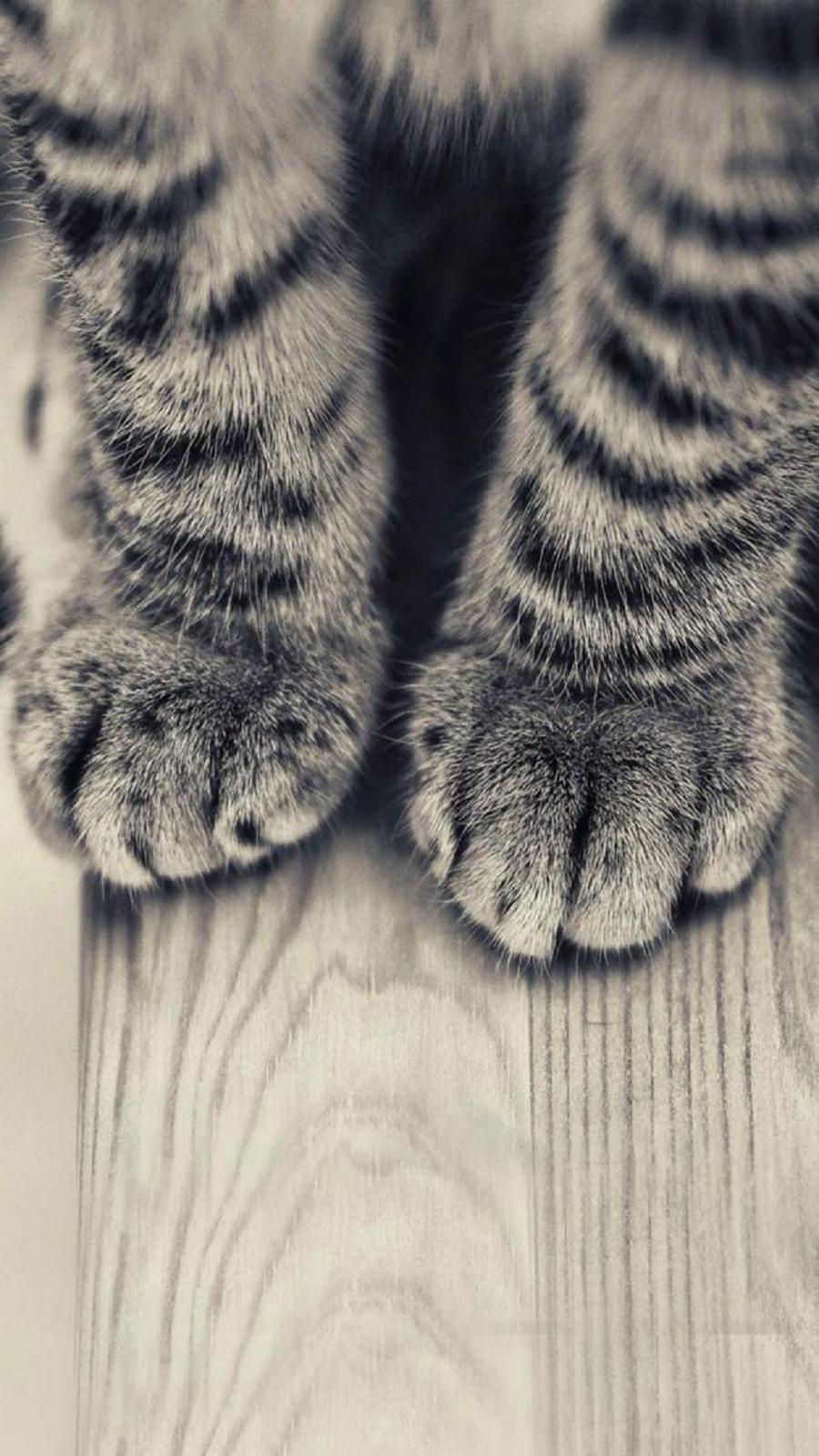 Gray Striped Kitten Legs Cat Android Wallpaper