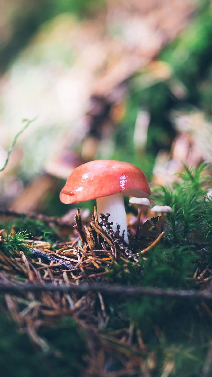 Mushrooms Wallpapers – Natural Wallpaper Free Download