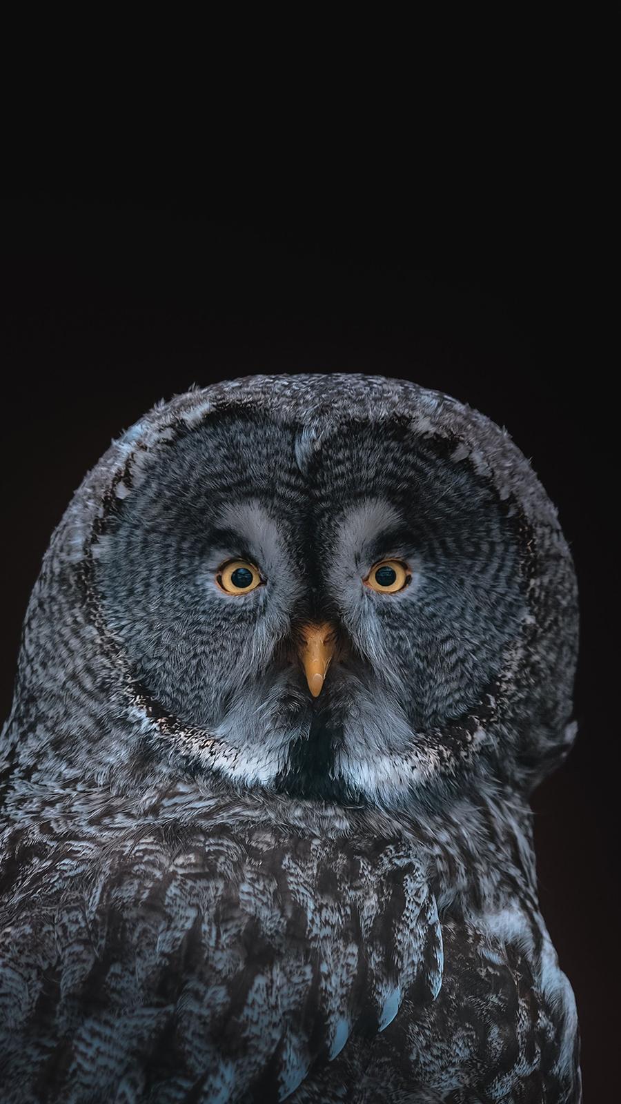 Bird, Owl Full HD Wallpapers Free Download