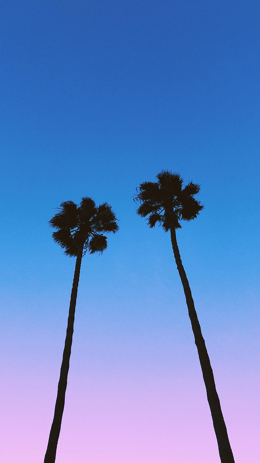 Sky, Palm, Nature HD Wallpapers Free Download