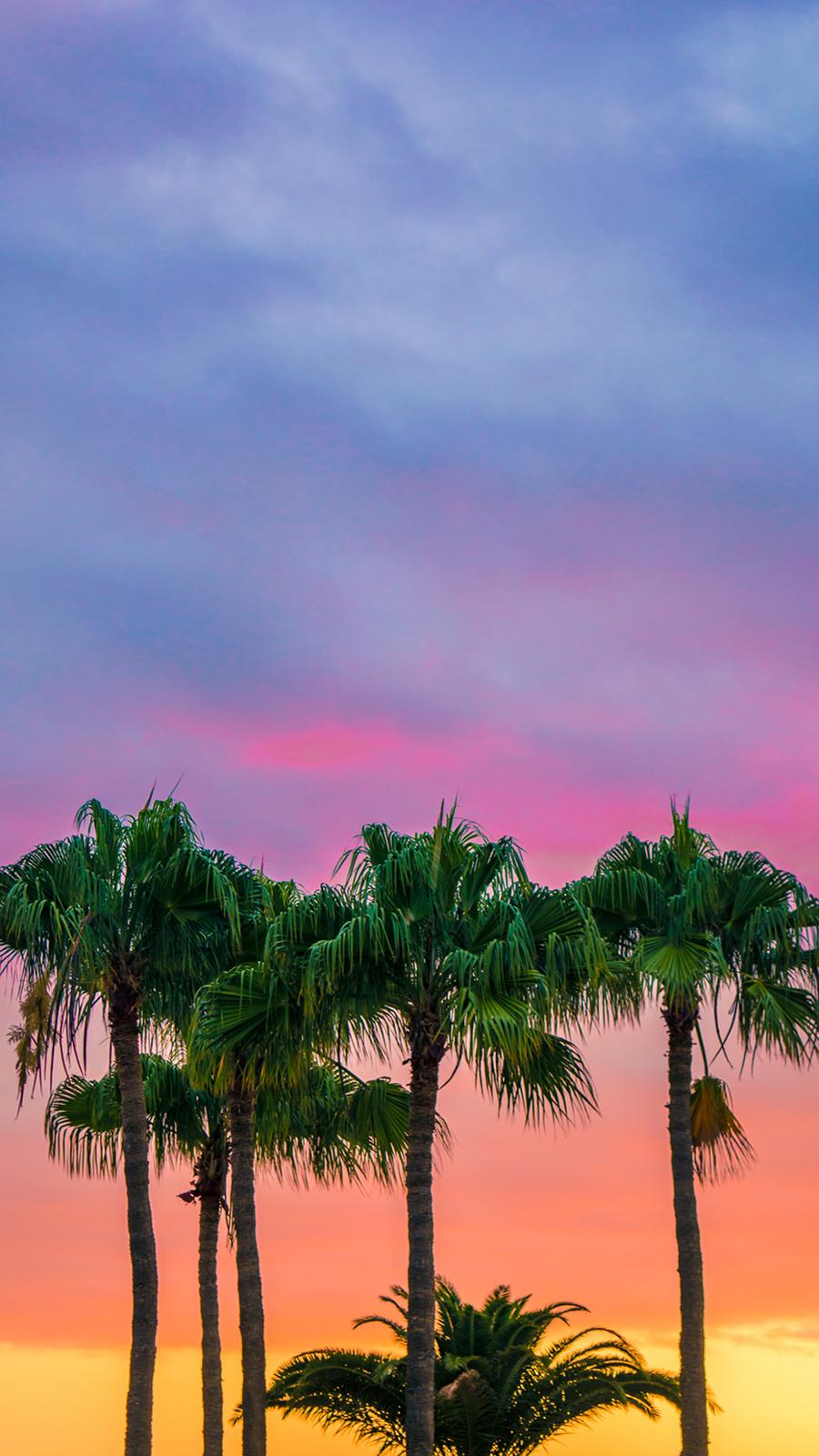 Sky, Sunset, Plam 4K HD Wallpapers Free Downoad