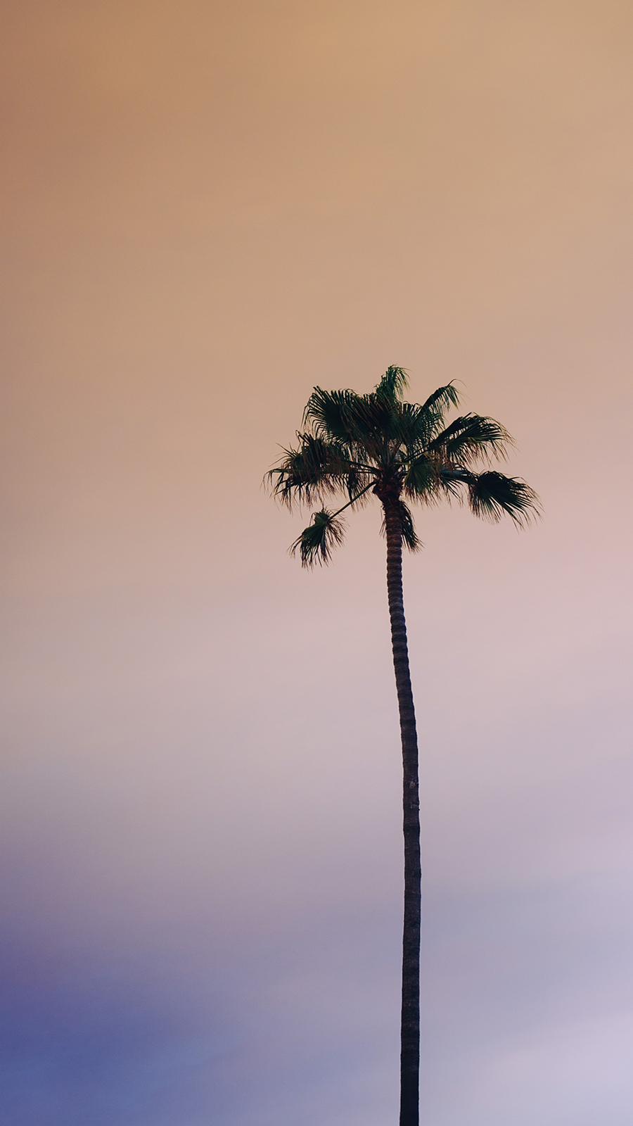Slim Palm Wallpapers Free Download Phone & Desktop