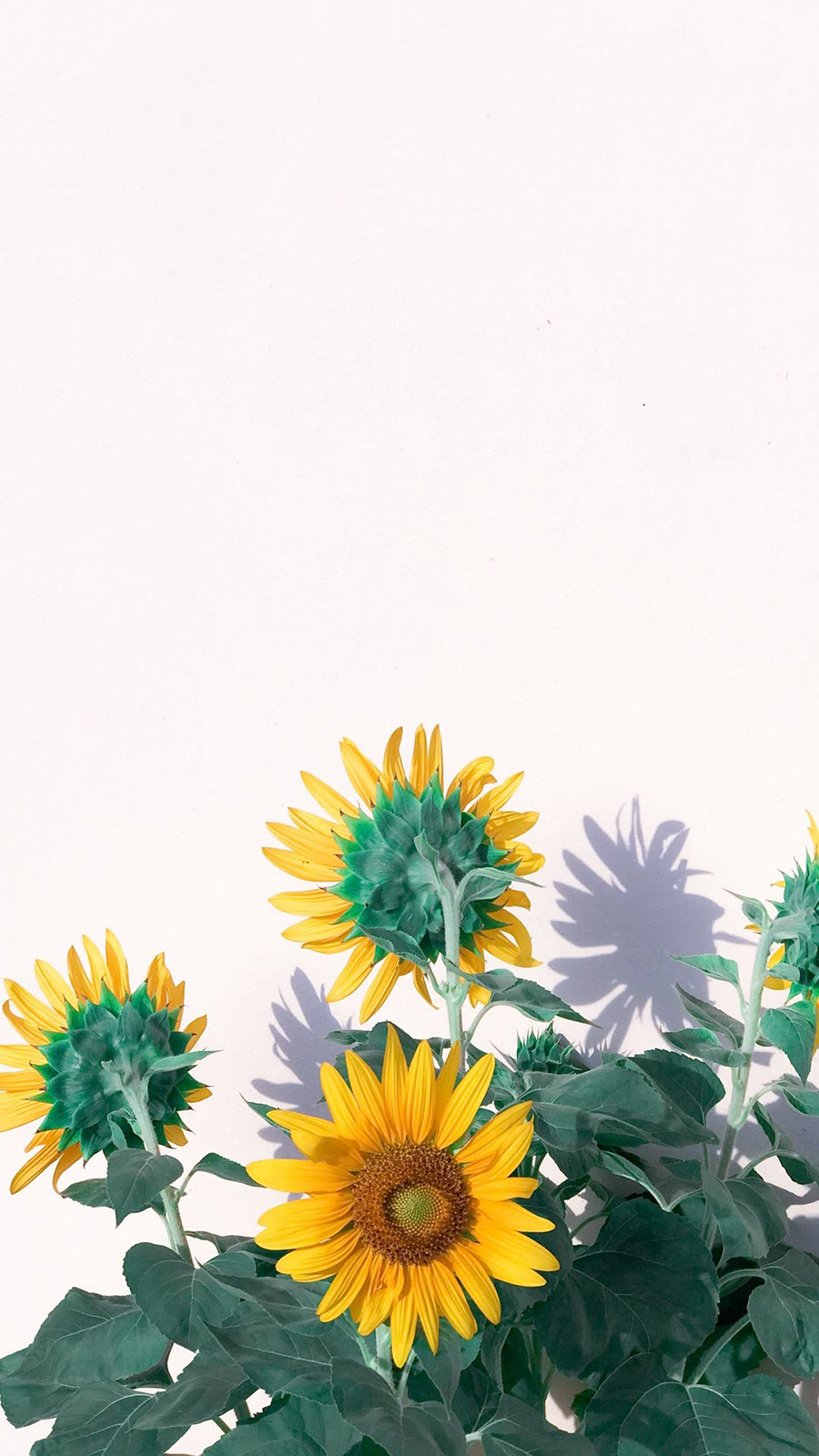 Yellow Flower Wallpapers Free Download