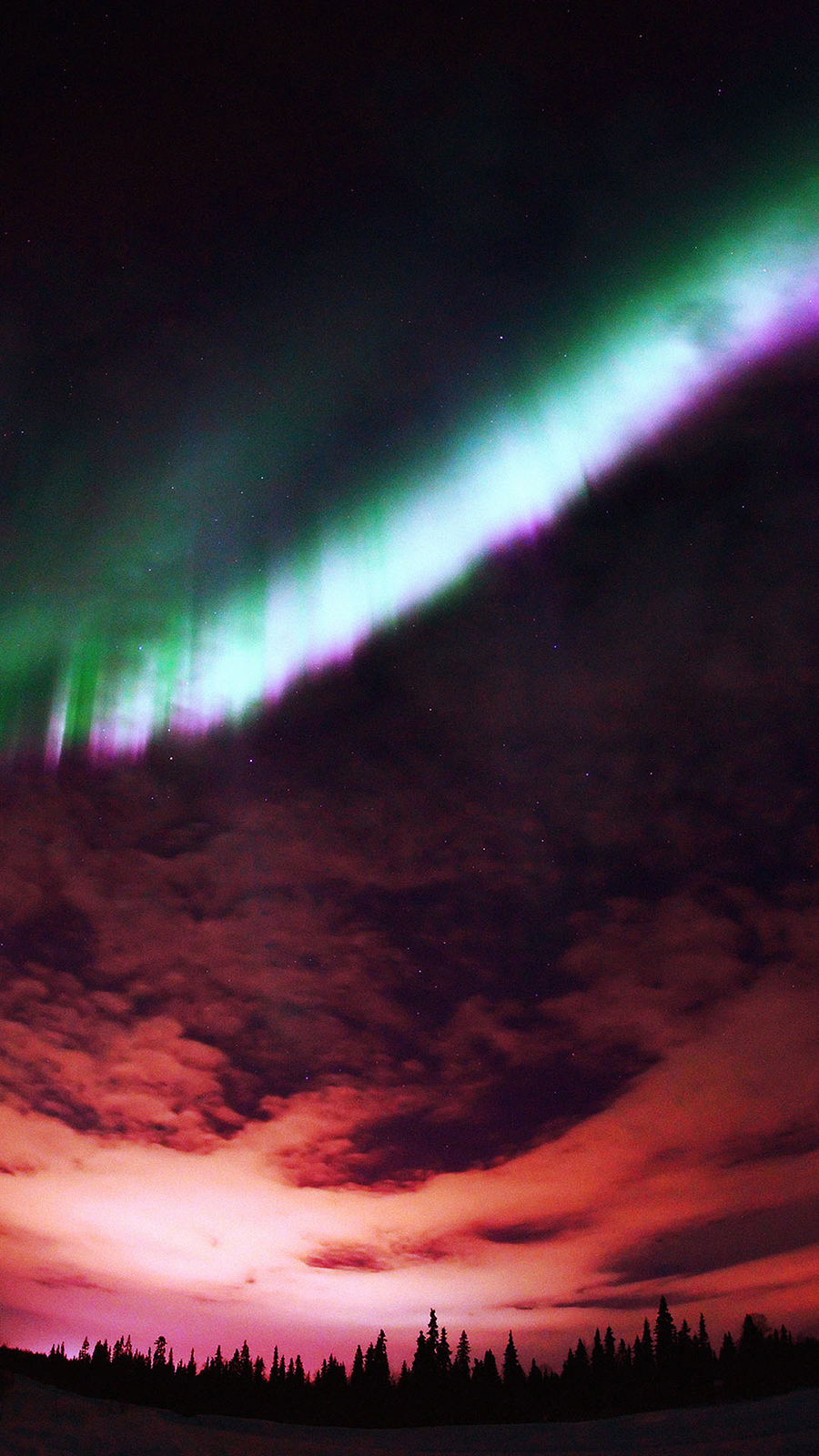 Aurora Purple Sky & Forest Wallpapers Free Download