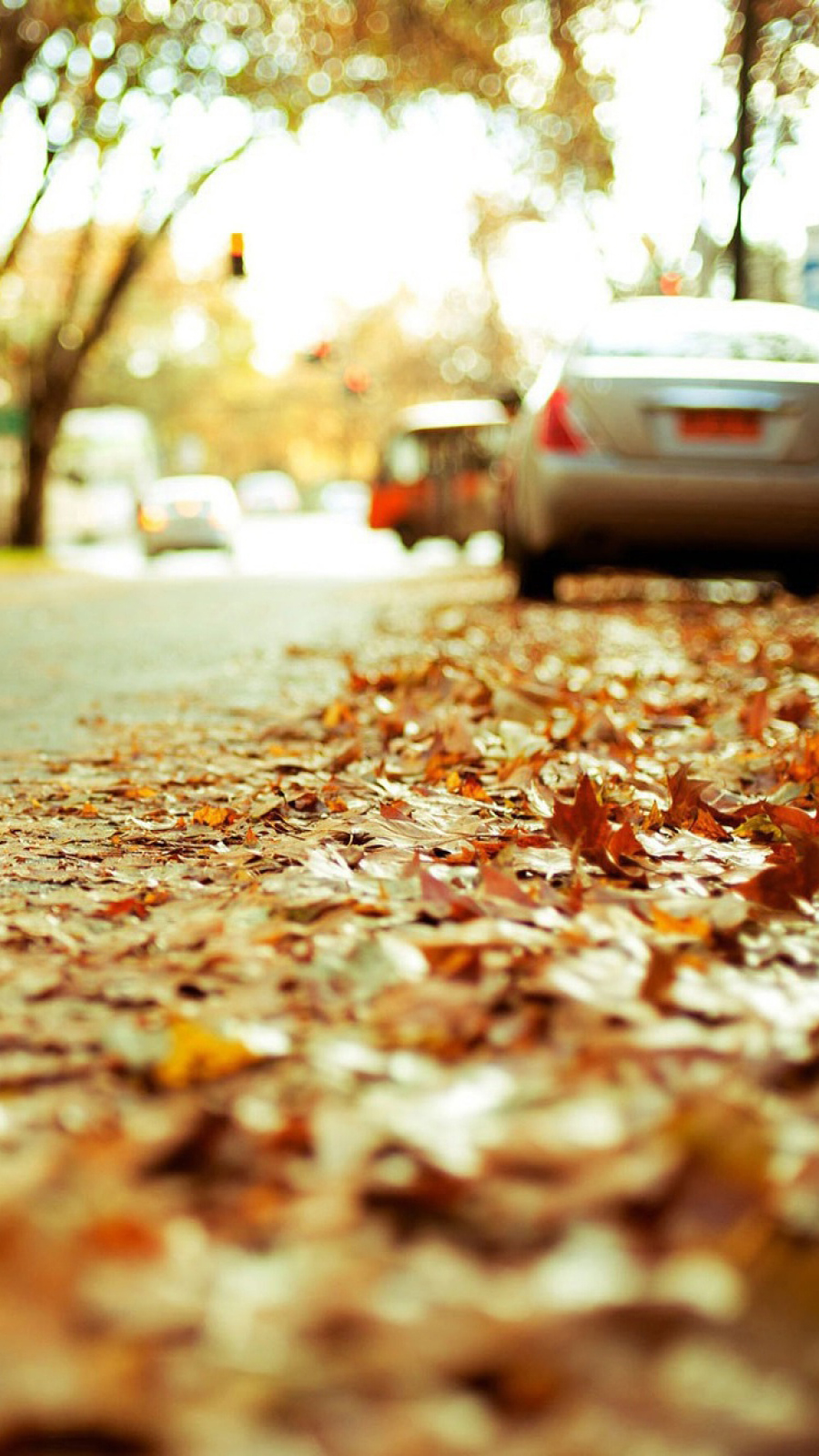 Autumn Fallen Leaves Wallpapers Free Download