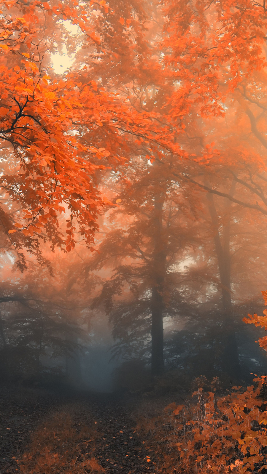 Autumn Forest Trees Wallpapers Free Download