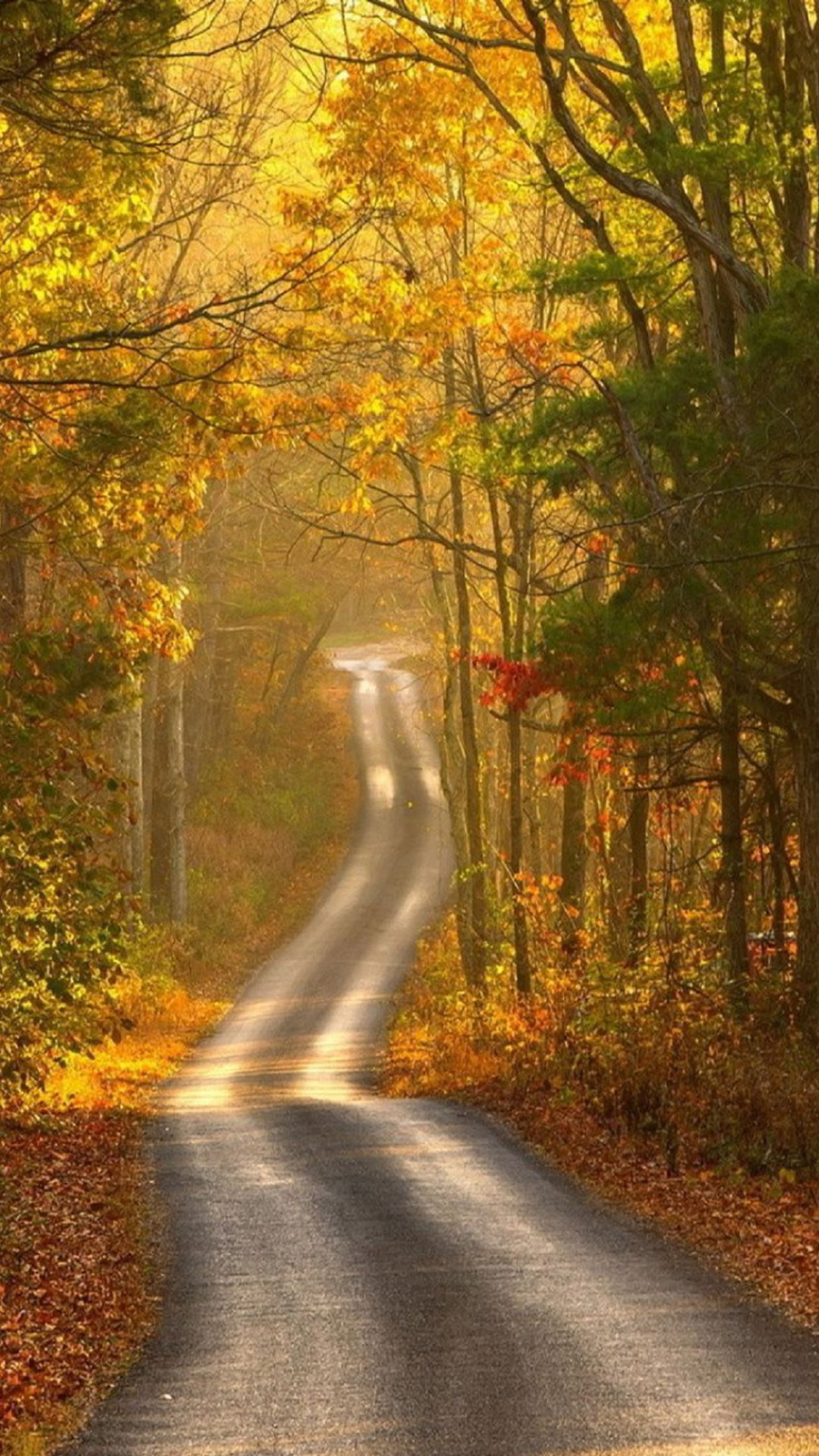 Autumn Forest Wallpapers Free Download