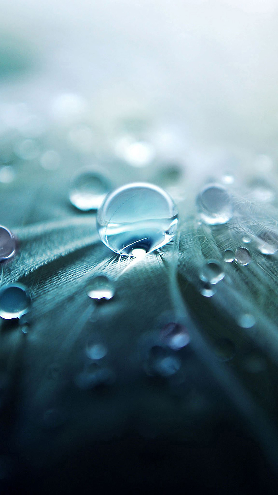 Blue Dew Drops Full HD Wallpapers Download