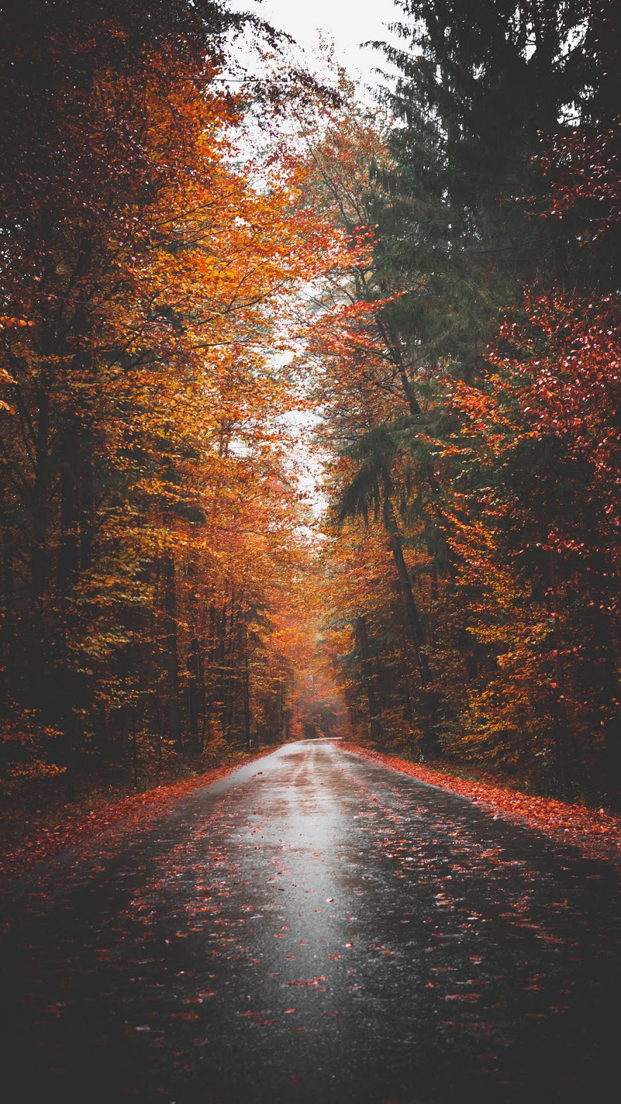 The Most Beautiful Autumn Wallpapers on the Internet