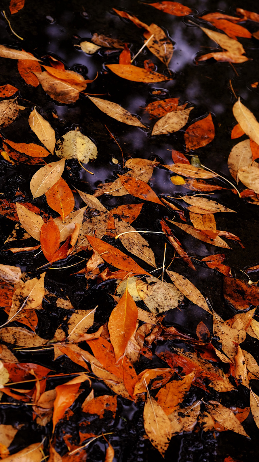 leaves Full HD Wallpapers Free Download