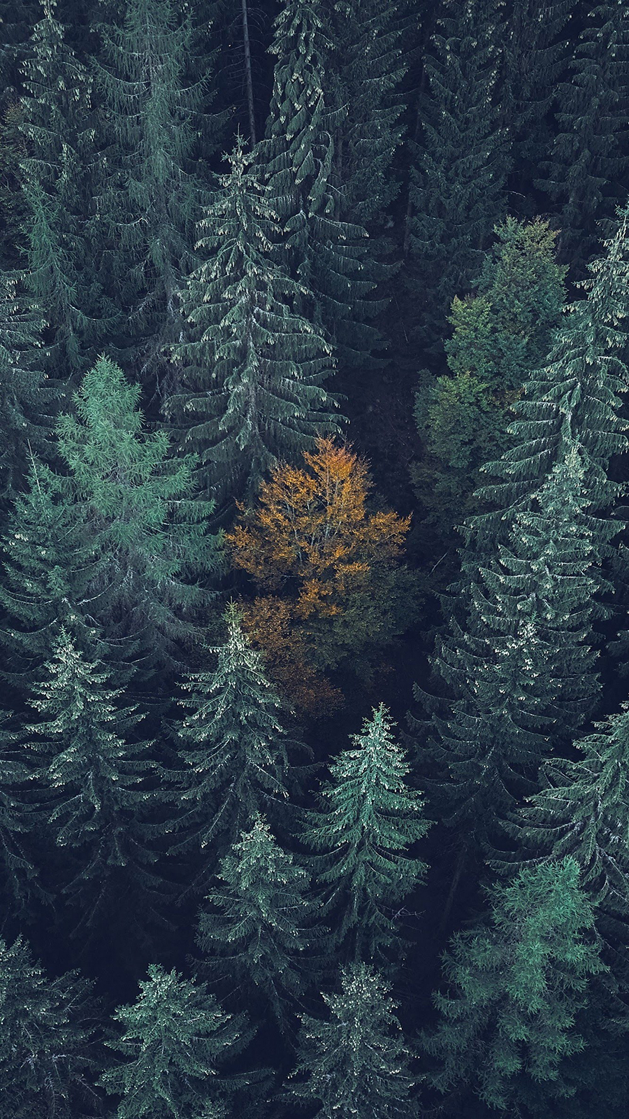 4K Trees Background Wallpapers Free Download