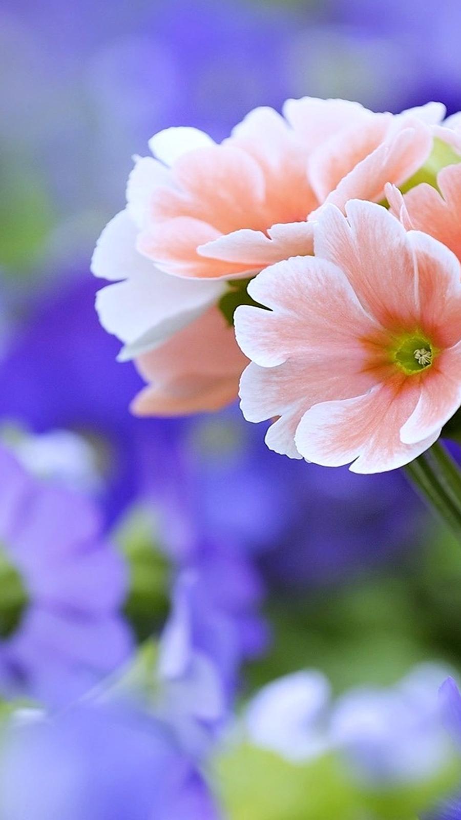 Beautiful Flowers Full HD Wallpapers Download