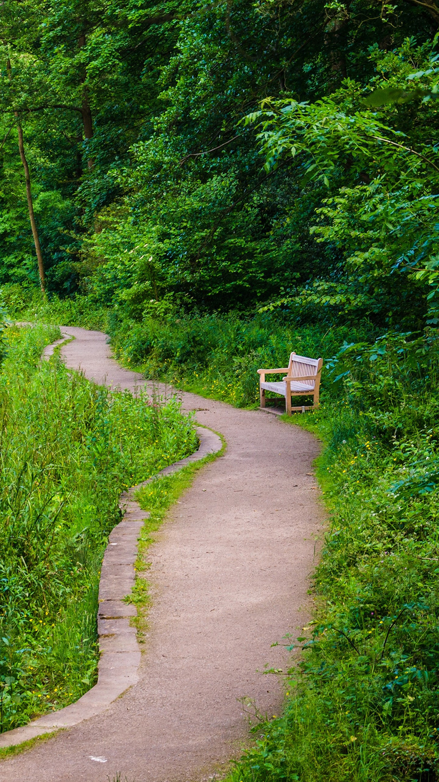 Bench Trees Trail Wallpapers Free Download