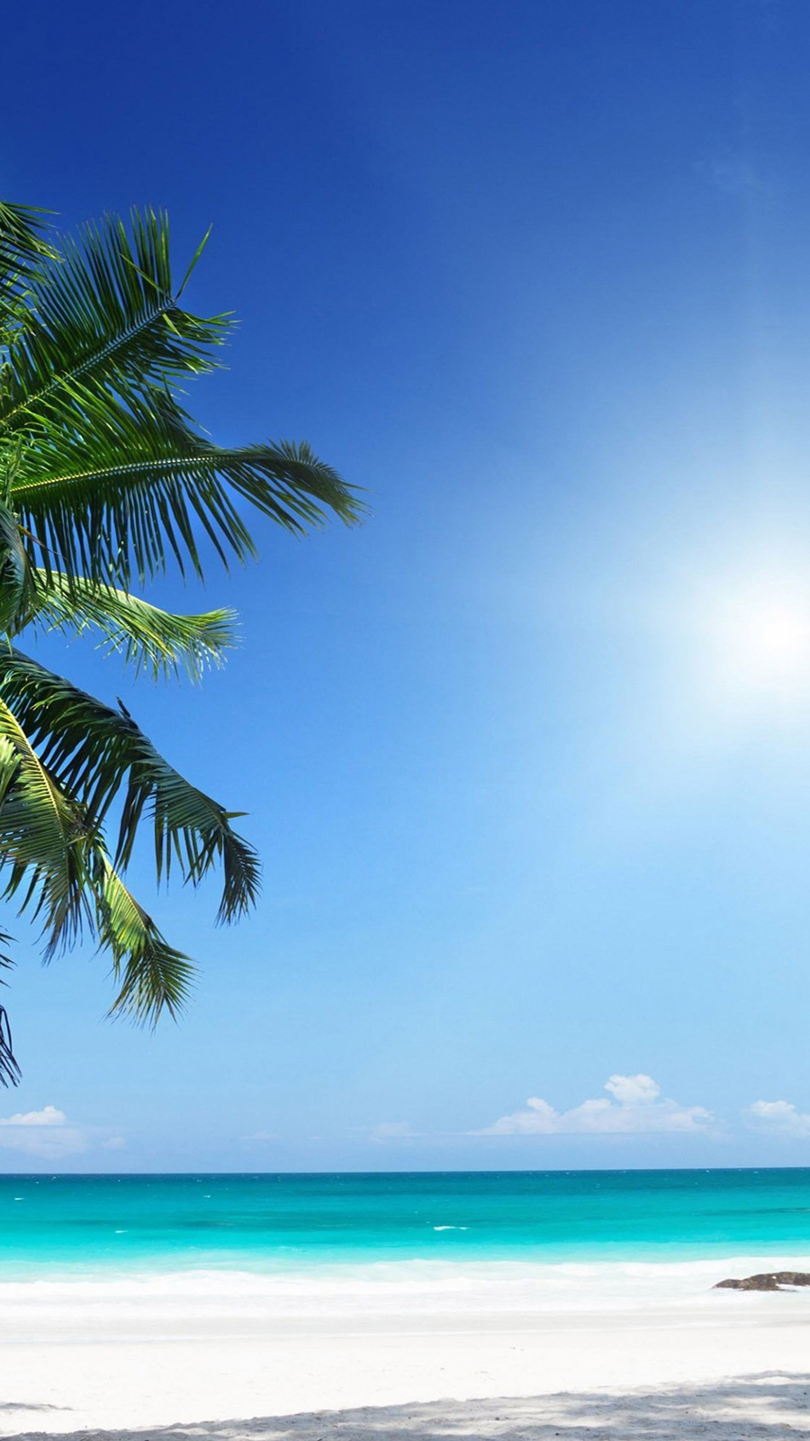 Palm Tree Ultra HD Wallpapers Download