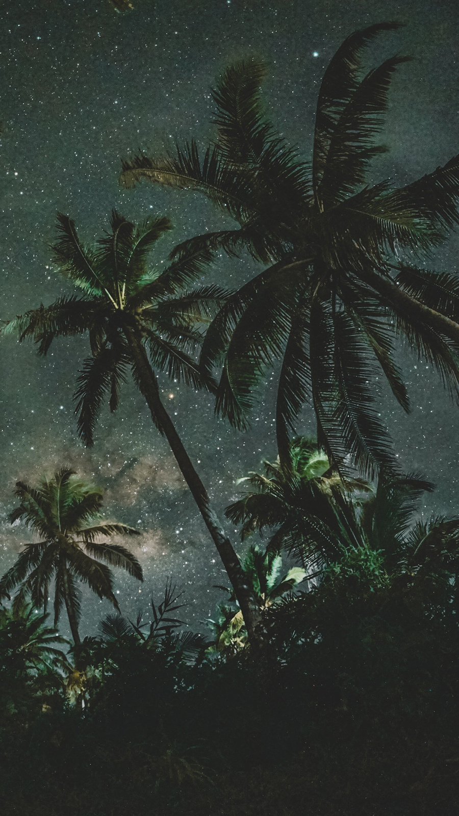Palms, Trees, Starry, Sky Wallpapers Download