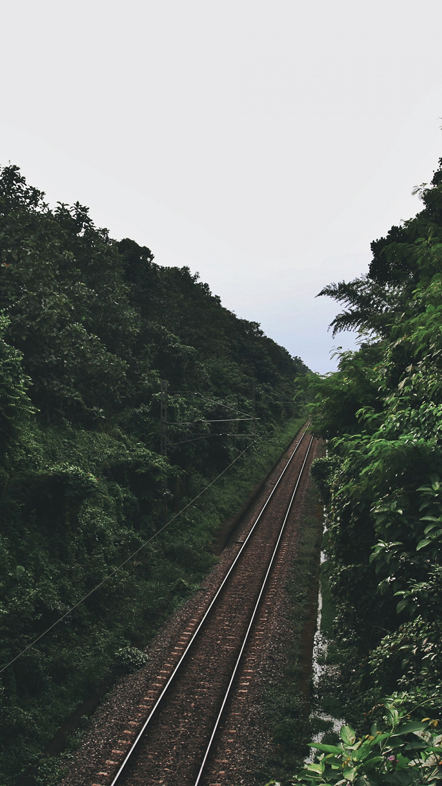 Railway Trees Road Full HD Wallpapers Download