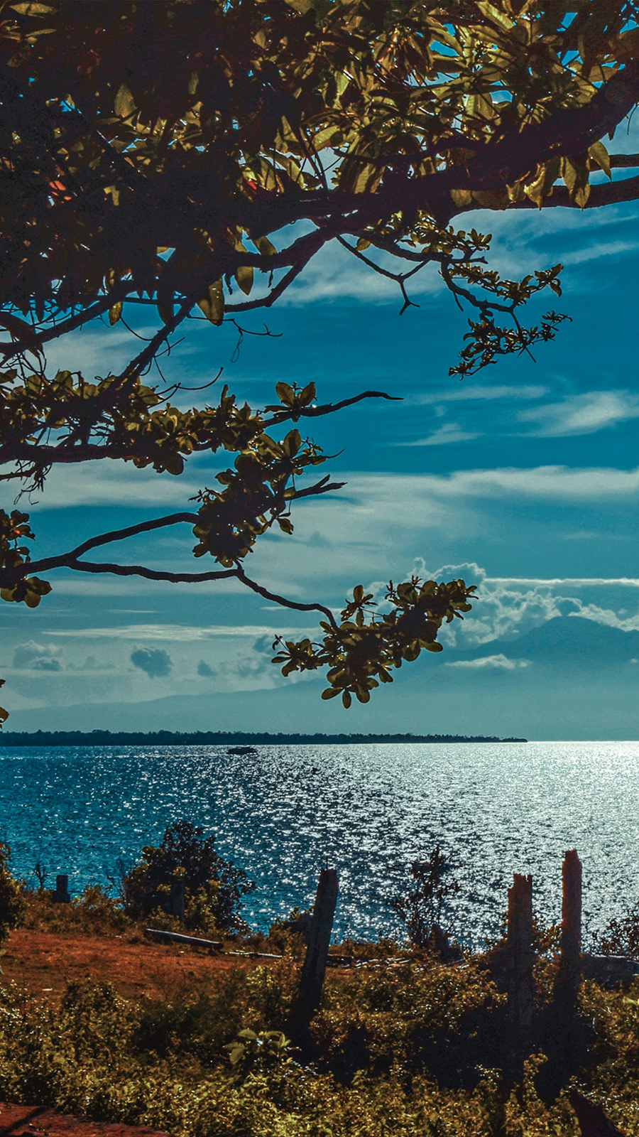 River Shore Trees Sunlight Wallpapers Free Download