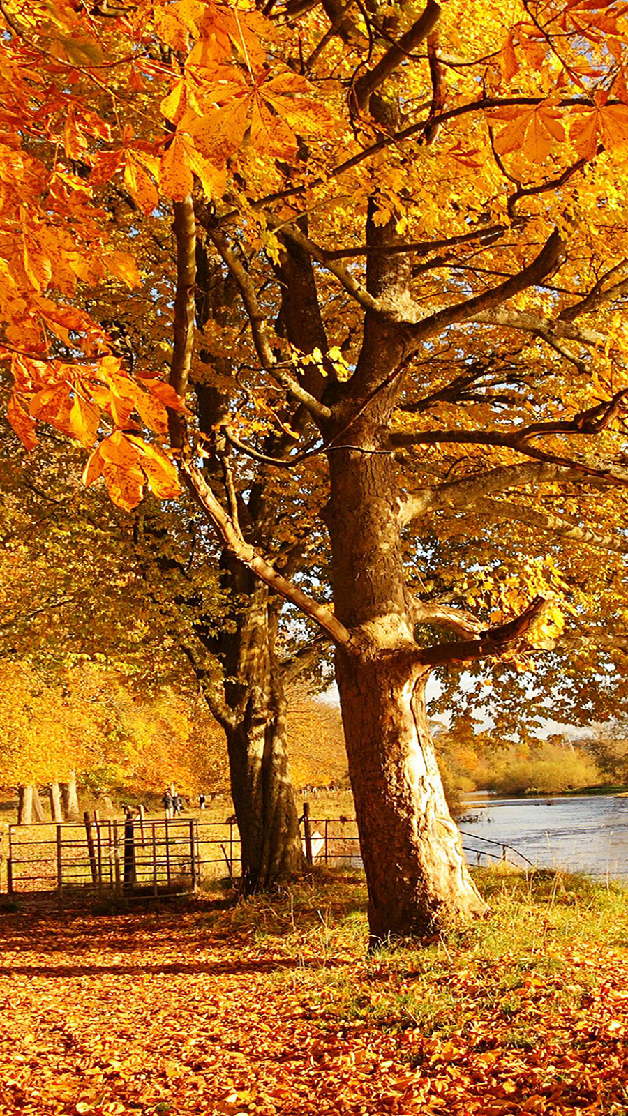 Scotland Autumn River Fall Wallpapers Free Download