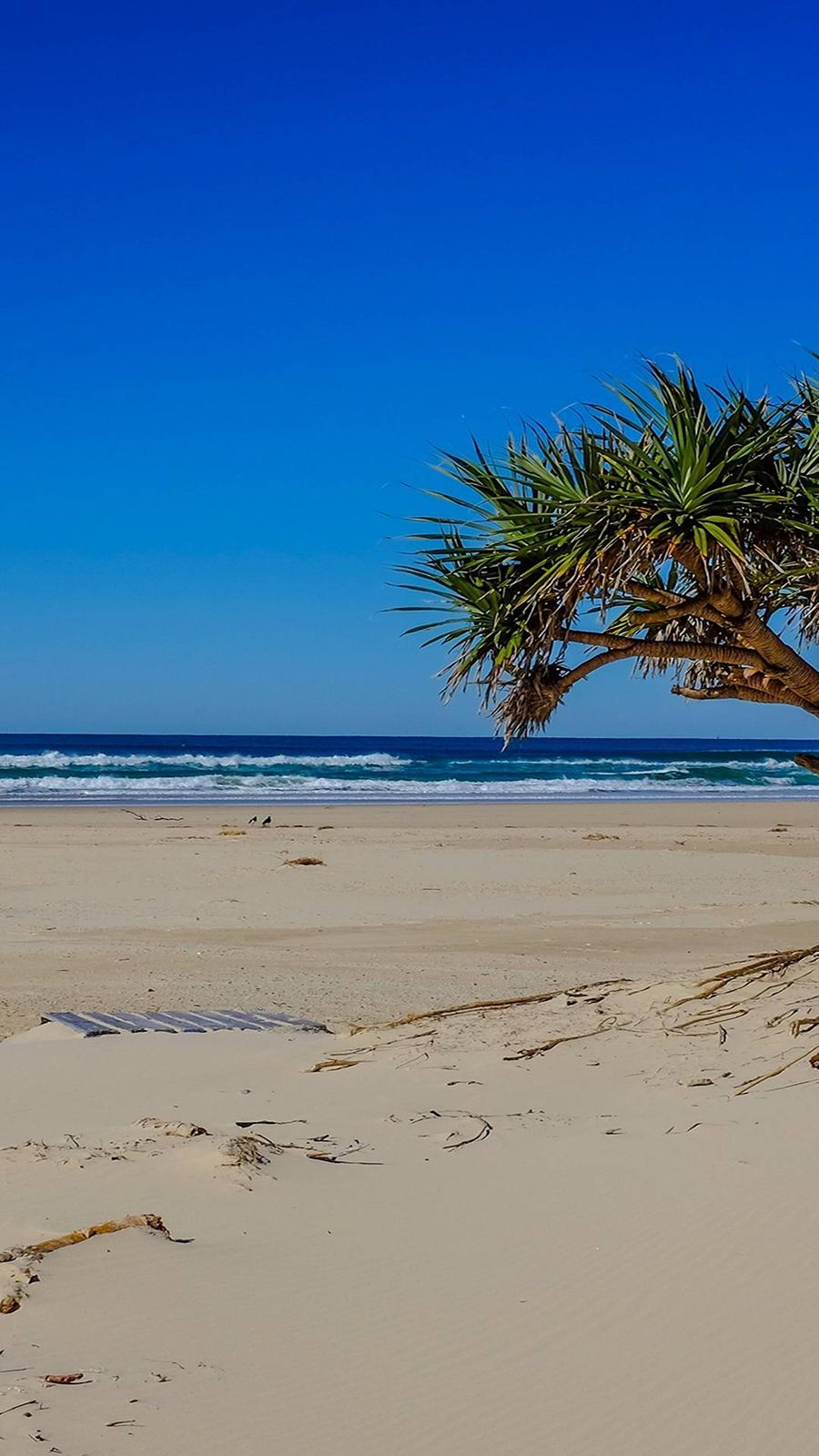Sea Beach Palm Tree Landscape Ocean Ultra HD Wallpapers Download