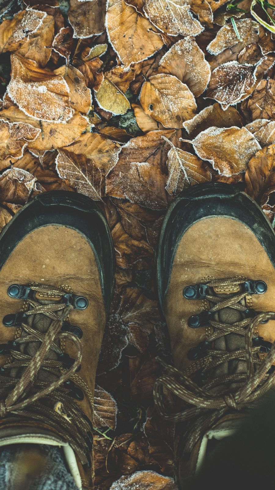 Shoes Autumn Legs Foliage Wallpapers Free Download