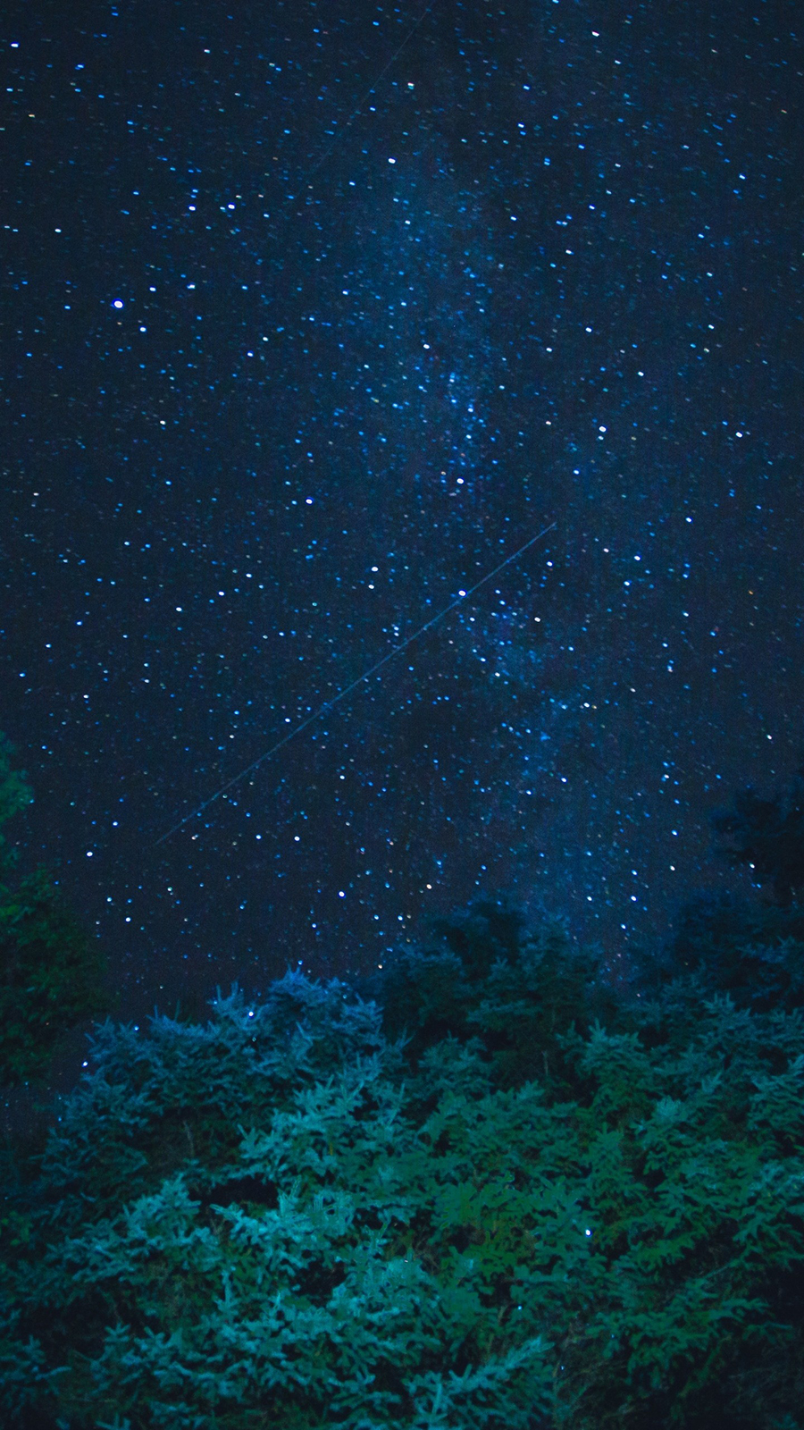 Starry Sky Stars, Night, Trees Free Wallpapers Download