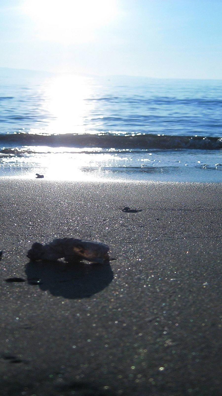 Sun, Sea, Light Full HD Wallpapers Download