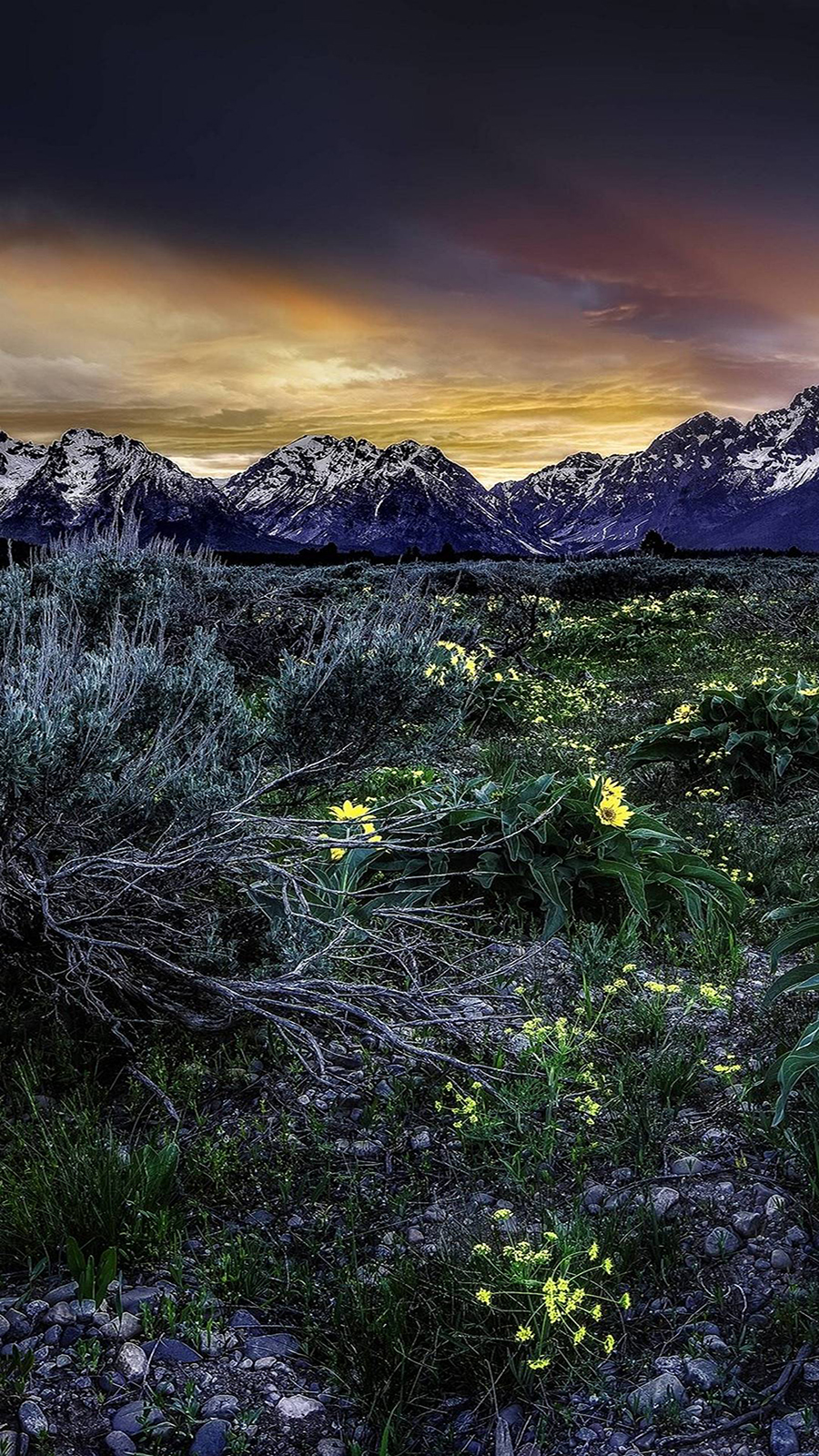 Sunset Mountains Field Flowers Wallpapers Free Download