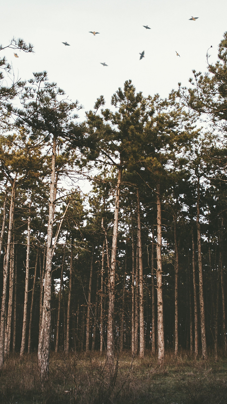 Trees, Forest, Grass, Evening, Wallpapers Free Download