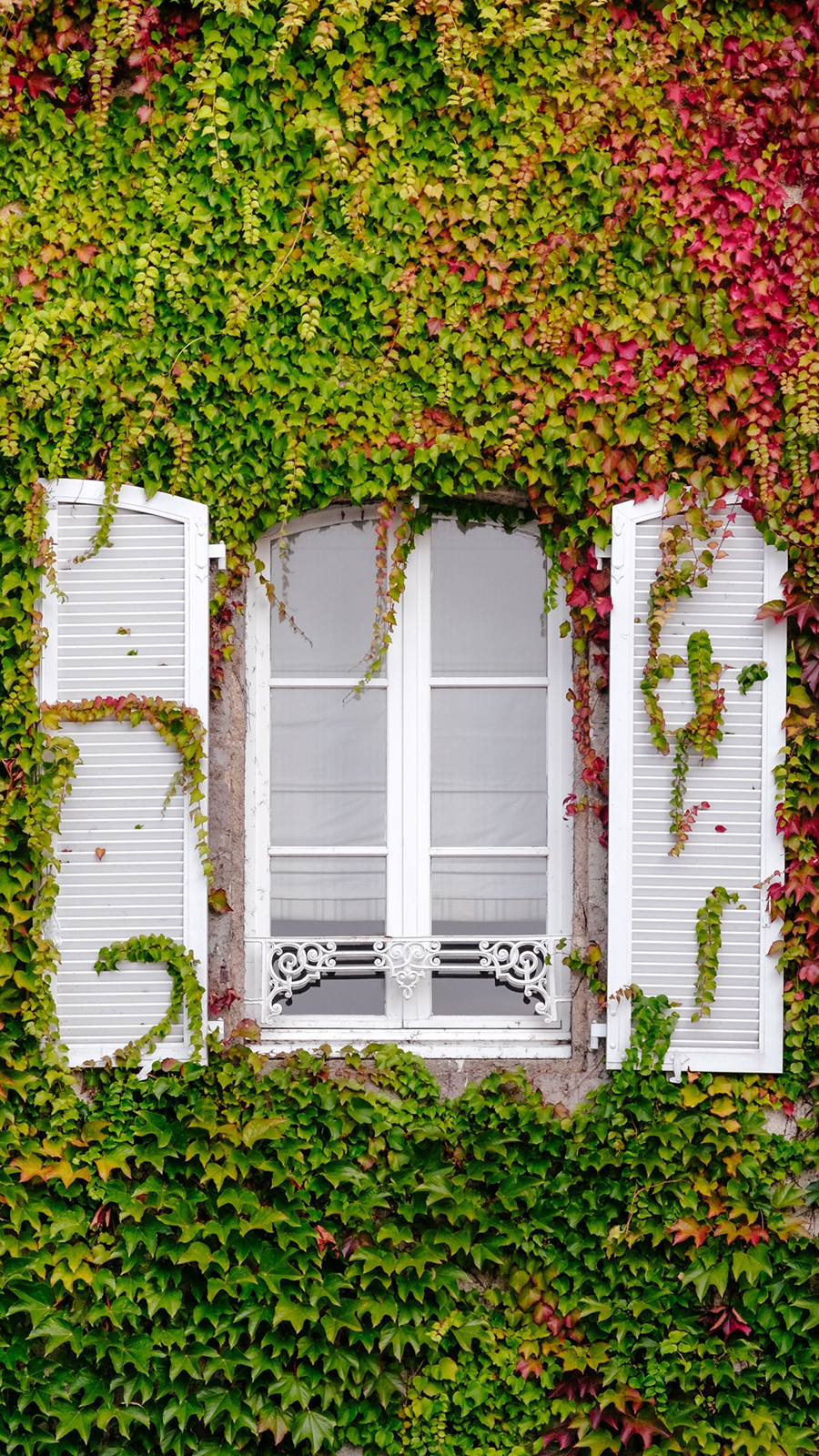 Window Foliage Facade Wallpapers Free Download