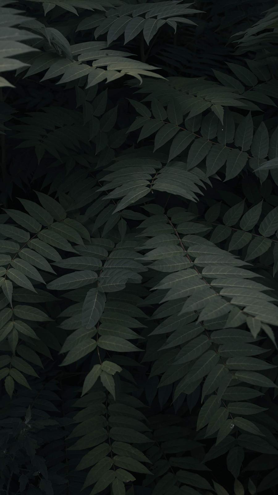 Leaf Background Wallpapers